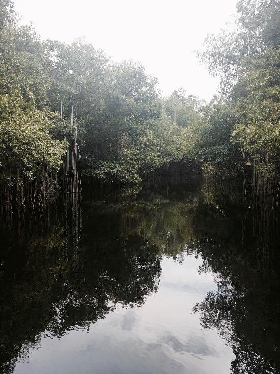 Black River Safari Jamaica