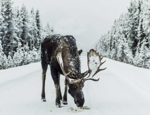 what to do when visiting alaska in winter