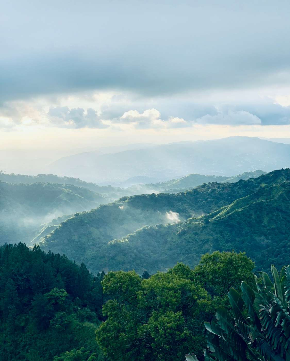 hiking-blue-mountain-peak-jamaica